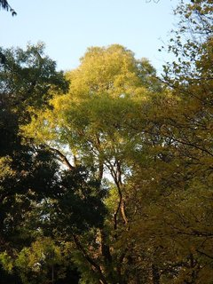 FOTKA - vrcholec stromu osvetlený slnkom