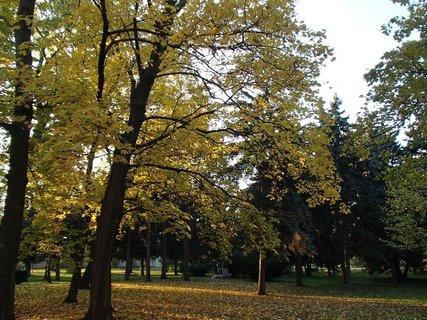 FOTKA - jese� v parku....