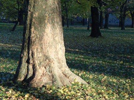 FOTKA - jeseň v parku.....