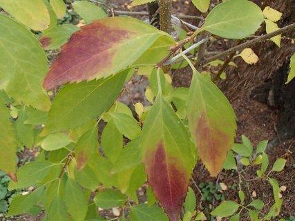 FOTKA - 2012 farby jesene166