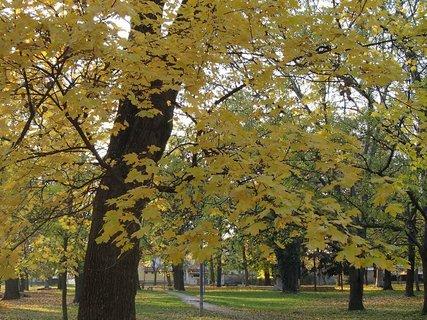 FOTKA - jeseň v parku......