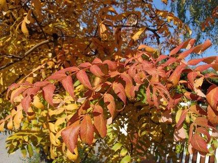 FOTKA - zlatistá jeseň.............
