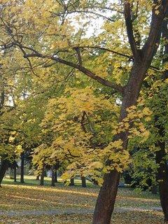 FOTKA - jeseň v parku.......