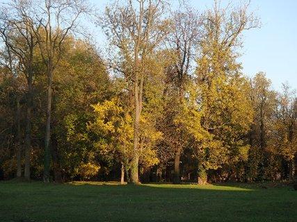 FOTKA - zaujalo ma osvetlenie stromov