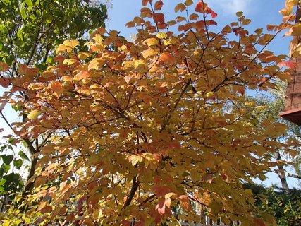 FOTKA - jeseň hrá farbami...