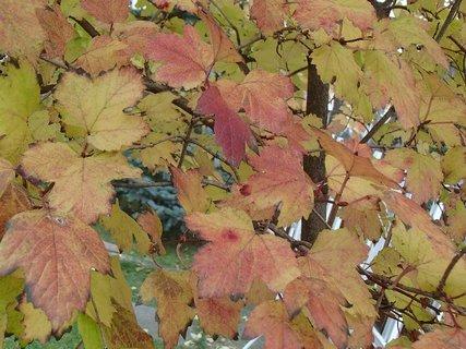 FOTKA - jeseň hrá farbami....