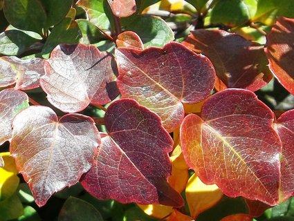 FOTKA - Podzim barví 21