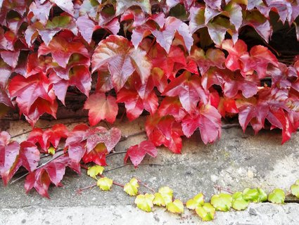 FOTKA - Podzim barví 22