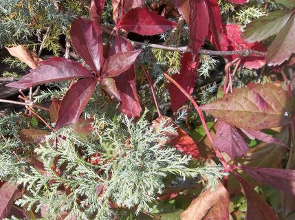 FOTKA - Podzim barví 23
