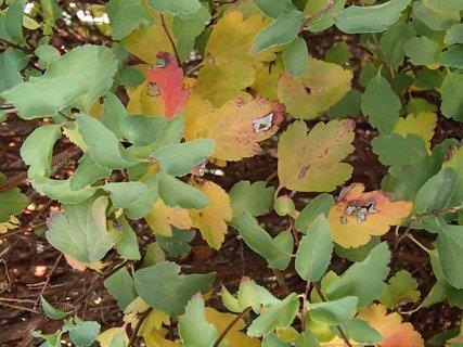 FOTKA - 2012 farby jesene167
