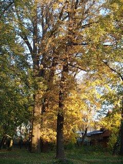FOTKA - park v jeseni