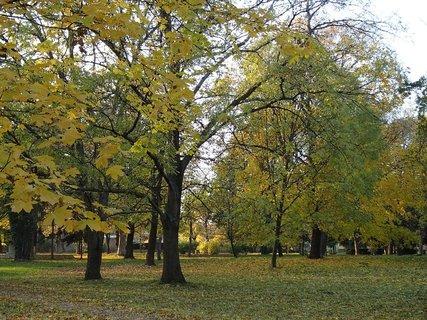FOTKA - park v jeseni.