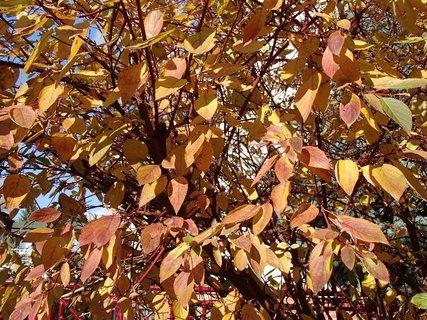 FOTKA - 2012 farby jesene170
