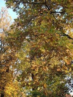 FOTKA - stromy v parku,