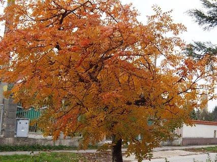 FOTKA - jeseň na ulici