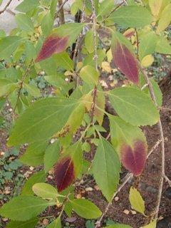 FOTKA - 2012 farby jesene171