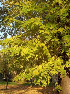 FOTKA - park v jeseni..