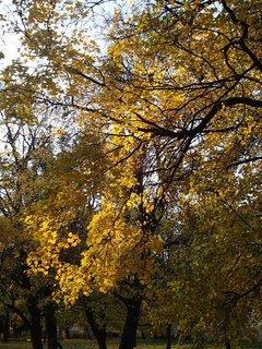 FOTKA - stromy v parku,,