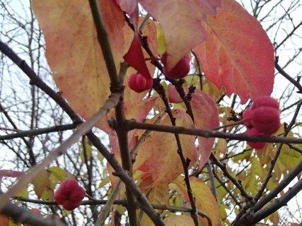 FOTKA - zaujímavé plody jesene