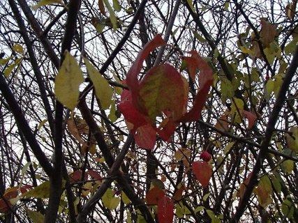 FOTKA - aj takto vyzerá jeseň