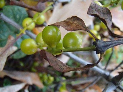 FOTKA - plody jesene52