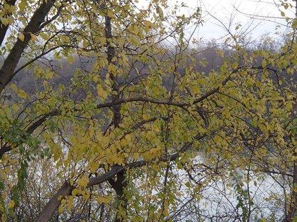 FOTKA - z jesennej prechádzky