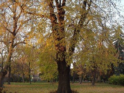 FOTKA - z jesennej prechádzky...