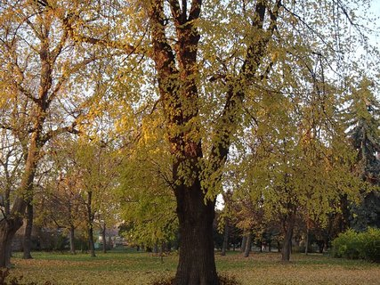 FOTKA - z jesennej prech�dzky...