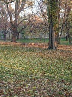 FOTKA - jeseň v parku........