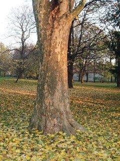 FOTKA - peň stromu v parku
