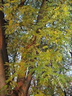 FOTKA - 2012 farby jesene176