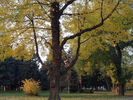 FOTKA - stromy v parku,,,