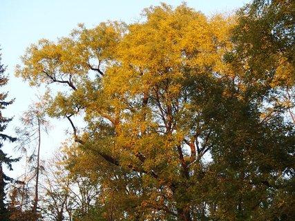 FOTKA - koruna stromu zaliata slnkom