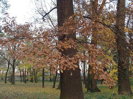 FOTKA - stromy v parku,,,,