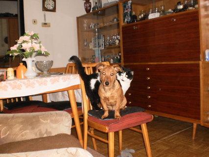 FOTKA - mazlíci -Lucky a Mikeš