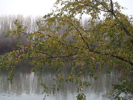 FOTKA - jeseň pri rieke