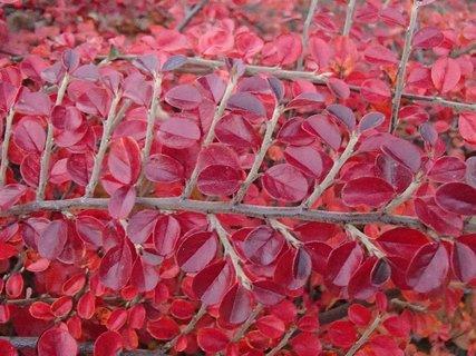 FOTKA - 2012 farby jesene180