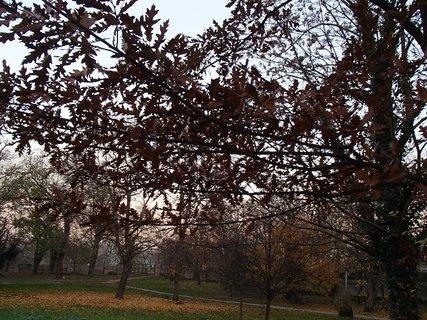 FOTKA - stromy v parku,,,,,
