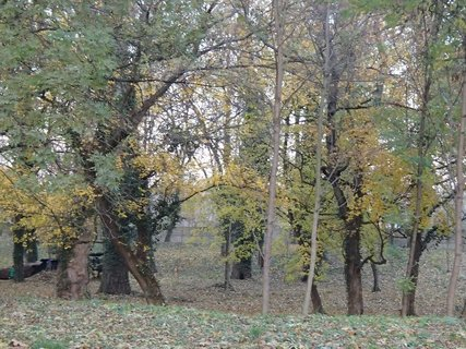 FOTKA - stromy v parku,,,,,,