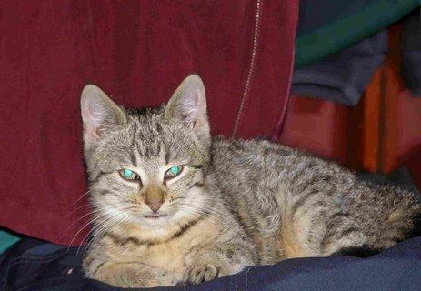FOTKA - kočky2012-7