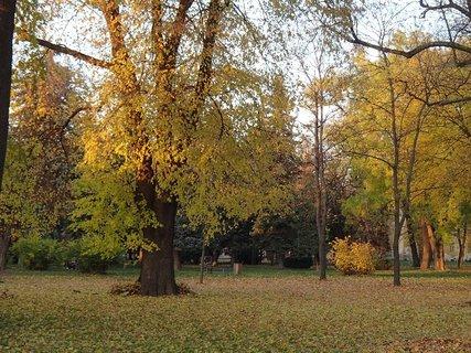 FOTKA - stromy v parku,,,,,,,