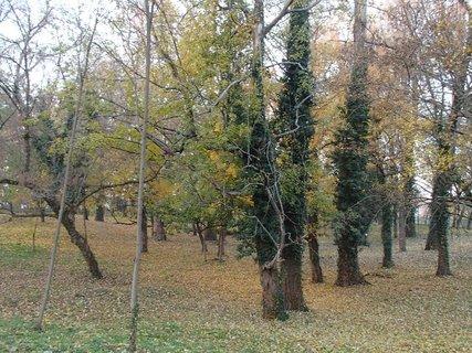 FOTKA - stromy v parku,,,,,,,,