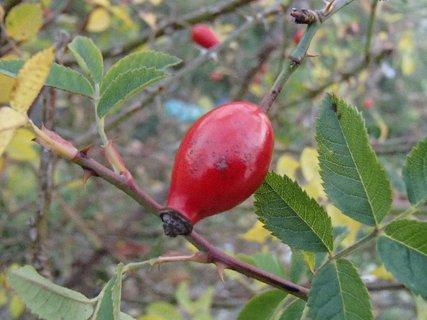 FOTKA - jesenná šípka