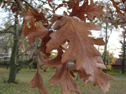 FOTKA - 2012 farby jesene183