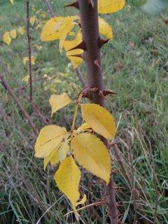 FOTKA - 2012 farby jesene185