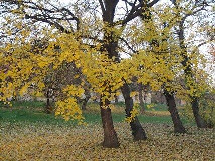 FOTKA - žltá jeseň.