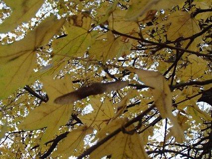 FOTKA - žltá jeseň..