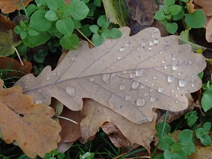 FOTKA - jesenné listy s kvapkami