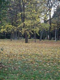 FOTKA - stromy v parku,,,,,,,,,