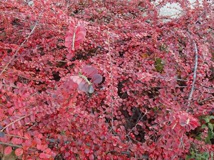 FOTKA - 2012 farby jesene186